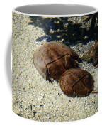 Horseshoe Crabs Coffee Mug