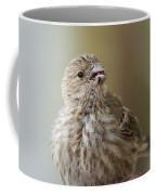 House Finch Profile Coffee Mug