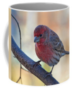 Housefinch IIi Coffee Mug