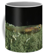 Hovering Goby On A Green Sponge, Fiji Coffee Mug