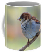 Humble Housesparrow Coffee Mug