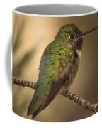 Humming Bird On Branch Coffee Mug