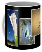 Hummingbird Collage 2009 Coffee Mug