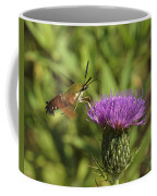 Hummingbird Or Clearwing Moth Din141 Coffee Mug