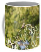 Hummingbird Resting In The Willow Coffee Mug