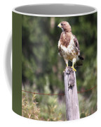 Hungry Hawk Coffee Mug