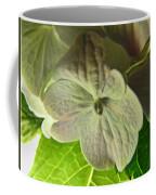 Hydrangea Macro Coffee Mug