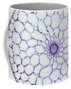 Hydrophyte Stem And Aerenchyma Coffee Mug