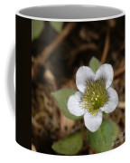 Hyoscyamus Flower Coffee Mug