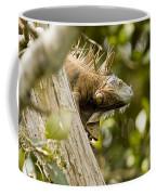 Iguana In Tree Coffee Mug