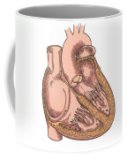 Illustration Of Heart Anatomy Coffee Mug by Science Source
