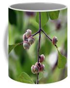 Immature Acorns Coffee Mug