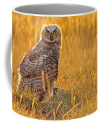 Immature Great Horned Owl Backlit Coffee Mug
