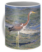 Immature Tricolored Heron Standing At High Tide Coffee Mug