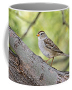 Immature White-crowned Sparrow  Coffee Mug