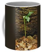 Indian Turnip 5582 0240 Coffee Mug