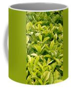 Indian Variety Of Tea Coffee Mug