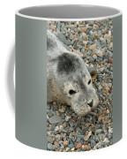 Injured Harbor Seal Coffee Mug