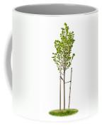 Isolated Young Linden Tree Coffee Mug
