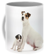Jack Russell Terrier Mother And Puppy Coffee Mug