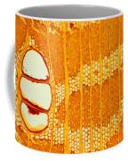 Jamaican Dogwood Vessels And Fibers Coffee Mug
