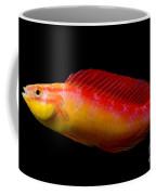 Jordans Fairy Wrasse Coffee Mug