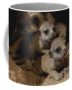 Just Waking Up, Two Meerkat Pups Coffee Mug
