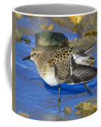 Juvenile Baird's Sandpiper Coffee Mug