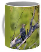 Juvenile Golden-fronted Woodpecker Coffee Mug
