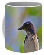 Juvenile Jay Coffee Mug