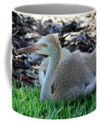 Juvenile Sandhill Crane At Rest Coffee Mug