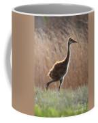 Juvenile Sandhill In The Marsh Coffee Mug