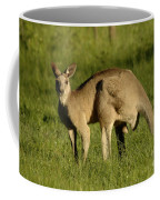 Kangaroo Male Coffee Mug by Bob Christopher