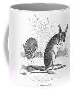 Kangaroo Rat Coffee Mug