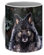 Keeshond Dog, Winnipeg, Manitoba Coffee Mug