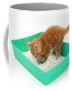 Kitten And Litter Tray Coffee Mug