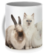 Kitten With Rabbits Coffee Mug