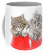 Kittens In A Food Bowl Coffee Mug