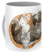 Kittens In Basket Coffee Mug
