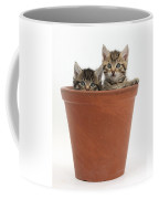 Kittens In Flowerpot Coffee Mug
