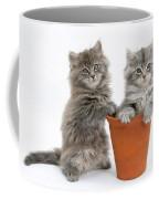 Kittens In Pot Coffee Mug
