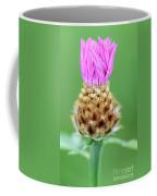 Knapweed Flower Coffee Mug