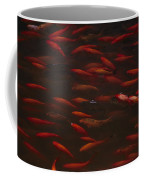 Koi Fish In China Coffee Mug