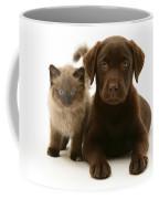 Labrador Pup And Birman-cross Kitten Coffee Mug