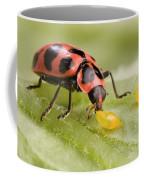 Lady Beetle Eats Potato Beetle Eggs Coffee Mug