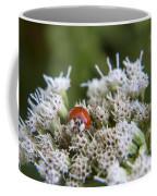 Ladybug Atop The Flowers Coffee Mug