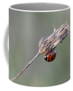 Ladybug On Dried Thistle Coffee Mug