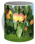 Lake Country Apricots Coffee Mug