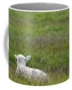 Lamb In Pasture, Alberta, Canada Coffee Mug