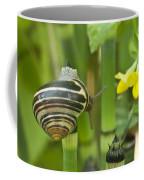 Land Snail 5698 Coffee Mug